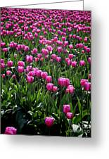 Purple Tulips Greeting Card
