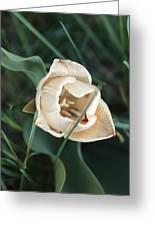 Tulipsandbluebells Greeting Card