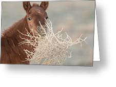 Tumbleweed Greeting Card