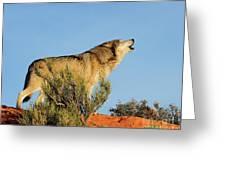 Tundra Wolf Greeting Card