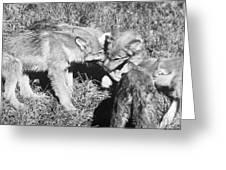 Tundra Wolf Pups Greeting Card
