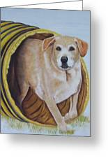 Tunnel Dog Greeting Card