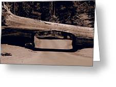 Tunnel Log - Sequoia National Park Greeting Card
