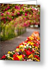 Tunnel Of Roses Greeting Card