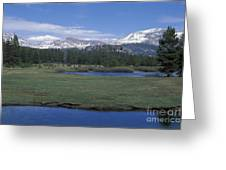 Tuolomne Meadows In June Greeting Card