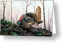 In Strut - Turkey Greeting Card