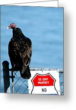 Turkey Buzzard Greeting Card