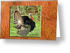 Turkey Strut Greeting Card