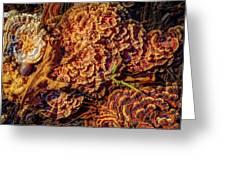 Turkey Tail Mushrooms  Greeting Card