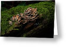 Turkey Tail Greeting Card
