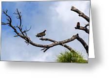 Turkey Vulture On Dead Tree Greeting Card