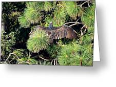 Turkey Vulture Spread Two Greeting Card