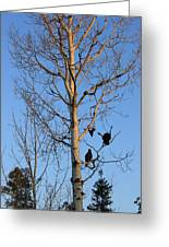 Turkey Vulture Tree Greeting Card
