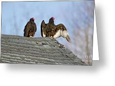 Turkey Vultures On Roof Greeting Card