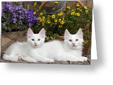 662805d3b9 Turkish Angora Kittens Photograph by Jean-Michel Labat