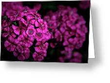 Turkish Carnation 5140 H_2 Greeting Card