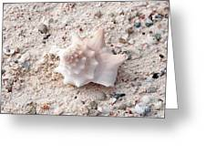 Turks And Caicos Shell Greeting Card