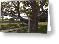 Turn At The Tree Greeting Card