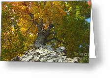 Turning Colors Greeting Card