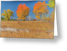 Turning Of Leaves Greeting Card