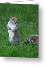 Turning Squirrel Greeting Card