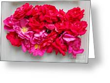 Turning Up Roses Greeting Card
