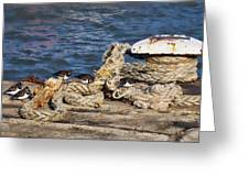 Turnstones At The Harbour Greeting Card