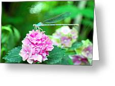 Turquiose Dragonfly  And Hydrangea Greeting Card