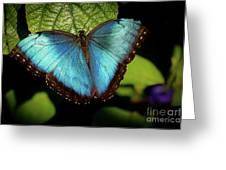 Turquoise Beauty Greeting Card