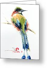 Turquoise-browed Motmot  Bird Greeting Card