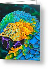 Turquoise Gold Macaw  Greeting Card by Daniel Jean-Baptiste
