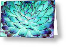Turquoise Succulent 1 Greeting Card