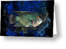 Turquoise Texas Cichlid  Greeting Card