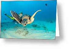 Turtle And Diver Greeting Card