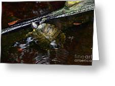 Turtle And The Stick Greeting Card