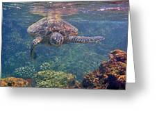 Turtle Approaching Greeting Card by Bette Phelan
