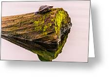 Turtle Basking Greeting Card