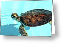 Turtle Close-up  Greeting Card
