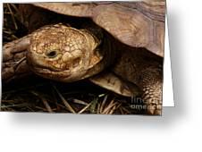 Turtle Closeup Greeting Card