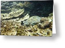Turtle Cove Greeting Card