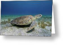 Turtle Cove Greeting Card