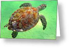 Turtle Day In Titusville,florida Greeting Card
