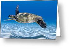 Turtle Flight -  Part 2 Of 3  Greeting Card