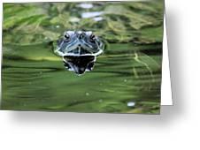 Turtle Head Greeting Card