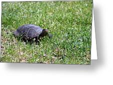 Turtle In The Grass Greeting Card