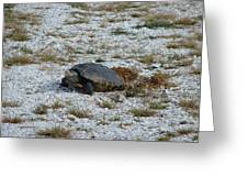 Turtle Laying Eggs Greeting Card
