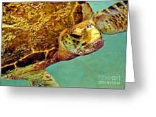 Turtle Life Greeting Card
