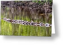 Turtle Log Greeting Card