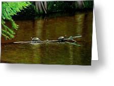 Turtle Log Spa Greeting Card by Doug Strickland