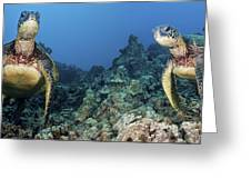 Turtle Panorama Greeting Card by Dave Fleetham - Printscapes